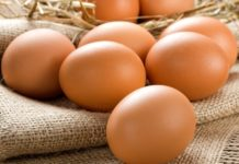 Launching An Egg Ovostar Asks Latvians To Allocate Them 94 Hectares Of Land For Egg Factory