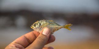Fish 2873877 1280 324x160