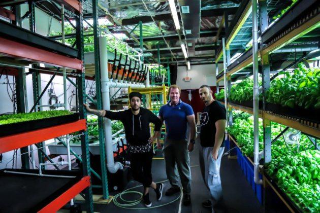 Metropolis Farms 10 630x420