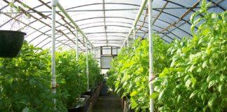 04 Ff Greenhouses 120 Ab 324x160