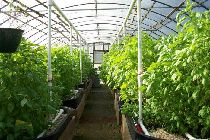 04 Ff Greenhouses 120 Ab 696x466