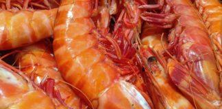 Shrimp 1141476 960 720 324x160