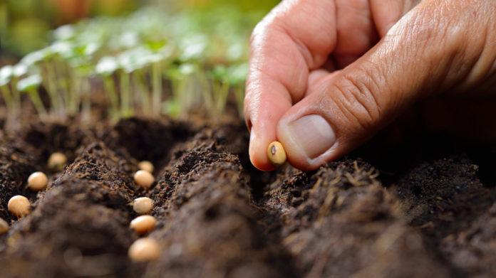 Сертификация семян сертификация продукции в казахстан