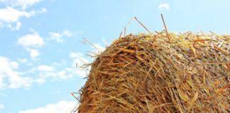Straw Role 1610987 1280 696x354 1 324x160