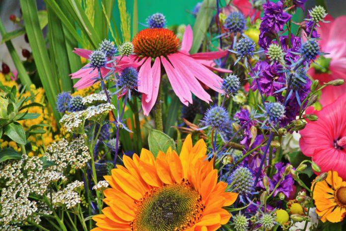 Flowers 910846 1920 696x464