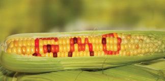 Gmo Crops 324x160