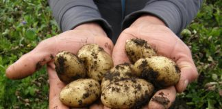 Potatoes 2543686 1920 324x160