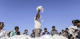 1213520 Coton Le Premier Producteur Mondial Entame Un Bras De Fer Avec Monsanto Web Tete 021835563962 324x160