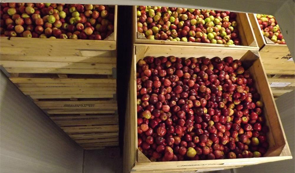 147naugon Long Term Storage Apple 12 2