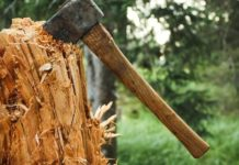 Axe To Grind Ukraine Will Lose 63 Of The Forest Planted In 2018 Due To Illegal Logging