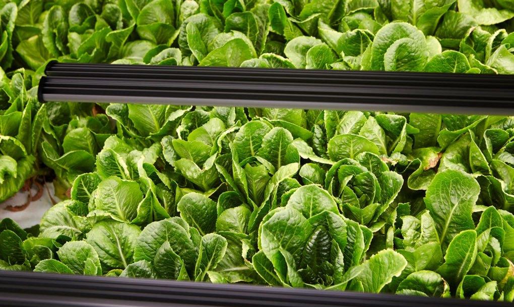 Bowery Farm Leafy Greens 1020x610