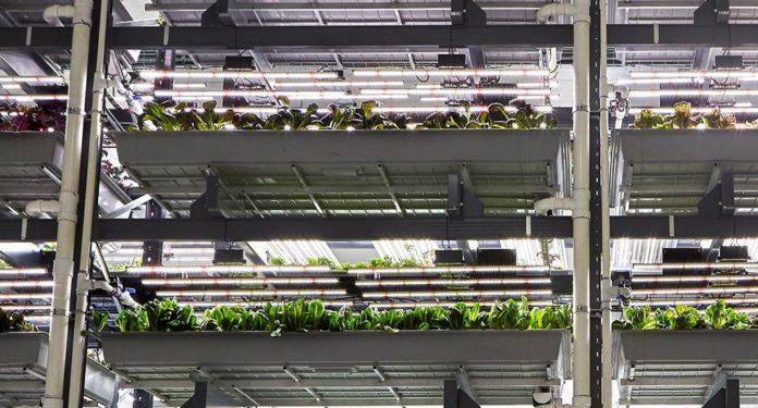 Bowery Farm Technology 1020x549 696x375