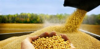 Tendencies Development Crop Production 324x160