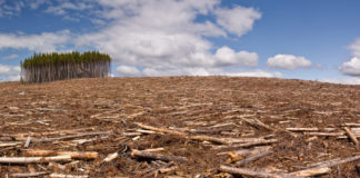 39011646 Deforestation E1507740732886 324x160