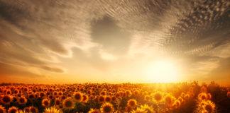Fields Sunflowers Sky 471583 324x160