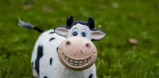 Cow 3105252 1920 324x160
