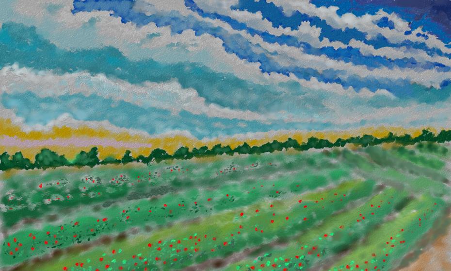Berry Field 3