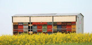 Bees Pasture 3362143 1920 324x160