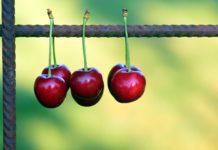 Cherries 2426138 1920 218x150