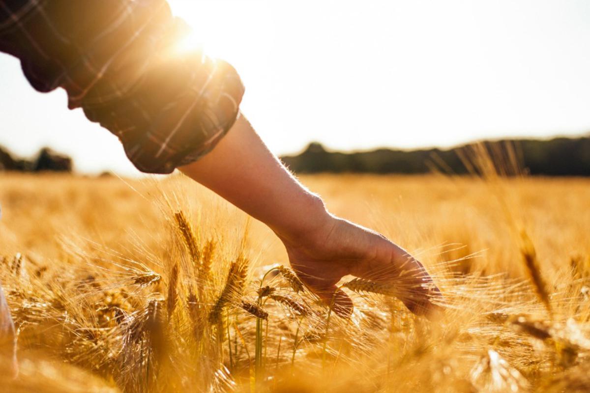 картинки фото люди в поле тебя