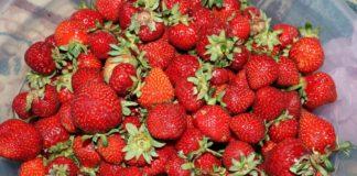 Strawberry 3397663 1280 324x160