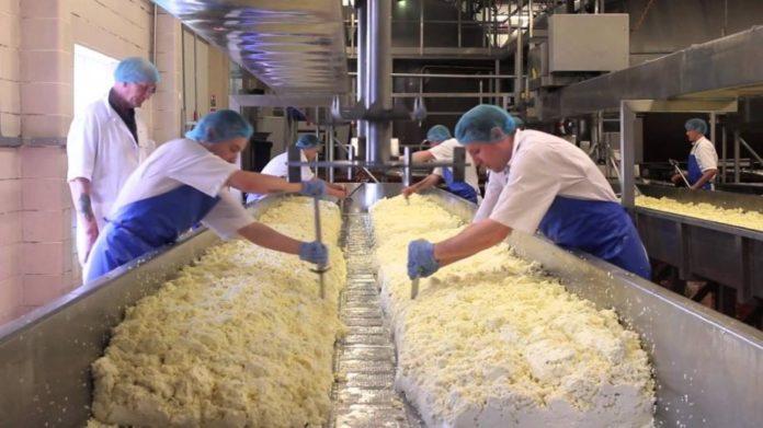 Milk Teeth Ukrainian Dairy Plants Have Too Little Power To Be Effective