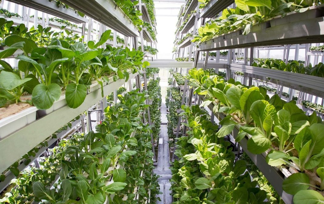 Sky High Plan The Land Market And Its Appreciation Will Give Rise To Vertical Farms