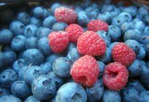 Wild Fruits 1535507 1280 218x150