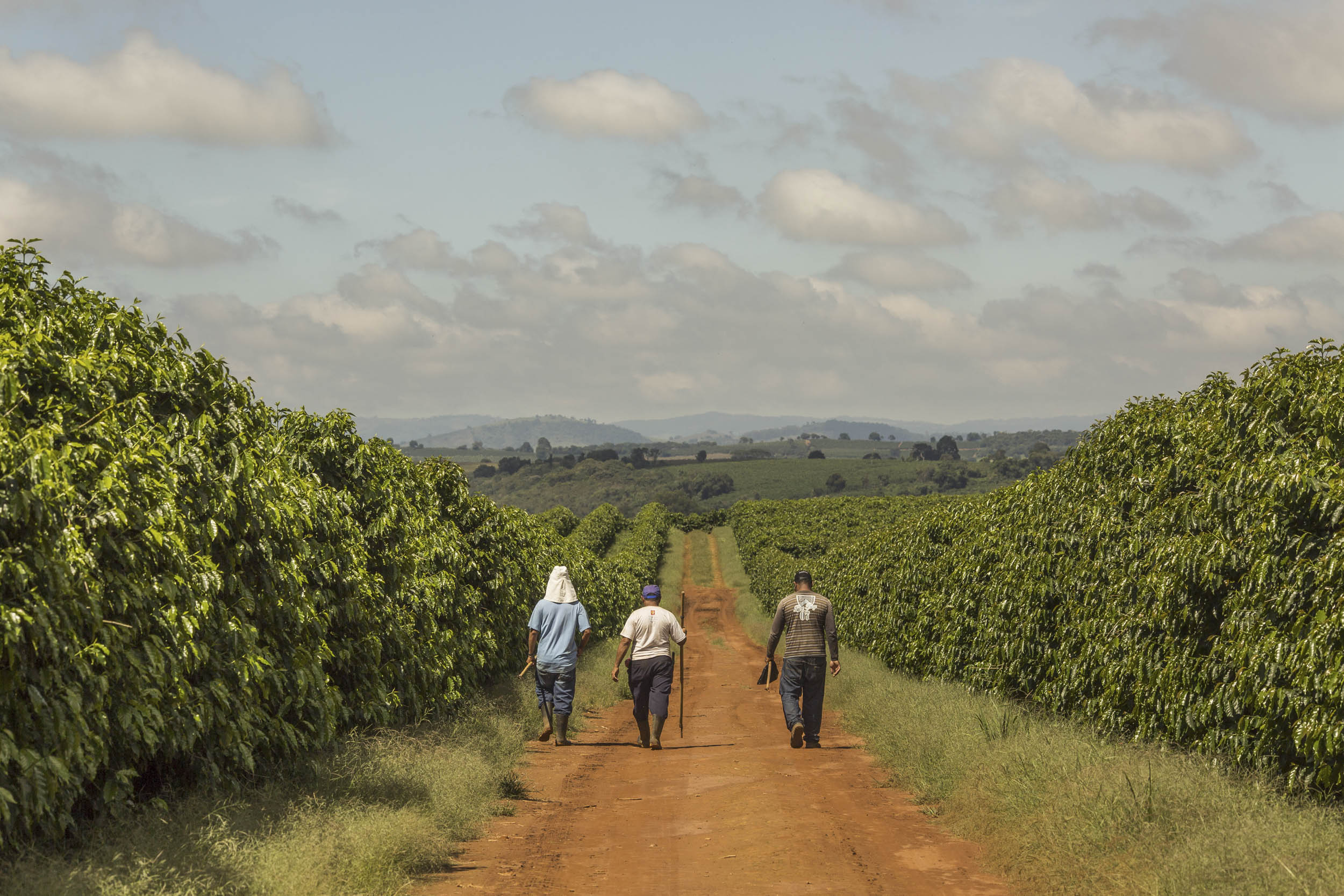 Coffee Operations In The Largest Coffee Growing State In Brazil