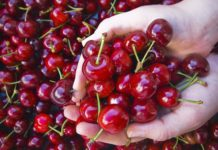 Sweet Cherish Europe Won T Be Able To Quot Swallow Quot The Export Of Ukrainian Sweet Cherries