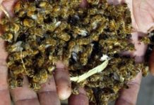Bee Hell In Half Of The Cases The Cause Of Mass Deaths Of Bees Were The Agrochemicals