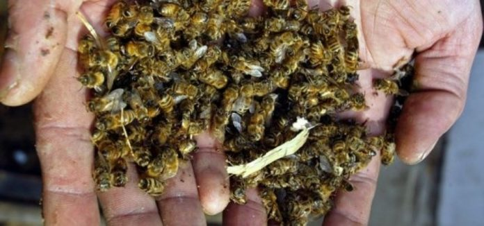 Bitter Honey Only In Sumy Region Died More Bee Colonies Than In The Whole Past Year In Ukraine