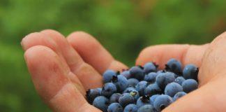 Blueberries 801571 1280 324x160