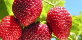 Growing Strawberries 324x160