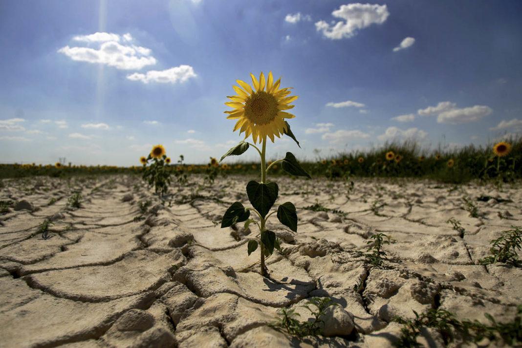 Drought 1068x712