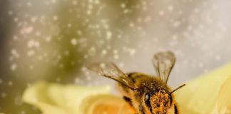 Bee 1726659 1280 324x160