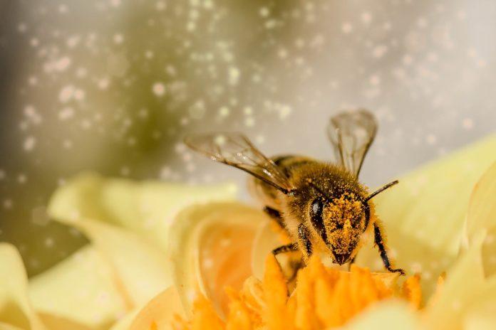 Bee 1726659 1280 696x464