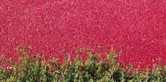 Cranberry Bog 2434917 1280 324x160