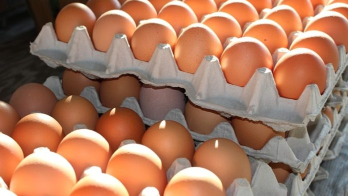 Ostrich Speed One Of The Largest Producers Raised Egg Prices By 40