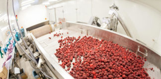 Frozen Raspberry Processing Business Red Raspberries Sorting Machines 47449617 324x160