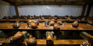 Development As A Spiral The Ato Veteran Opened His Farm Where He Grows And Stuffs Snails