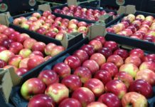 Give Them More Ukrainian Apples Will Be Bought In Asia If We Send Them One Container A Week