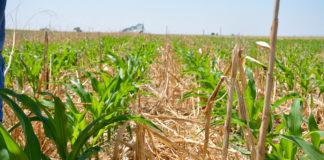 No Till Corn 2 324x160