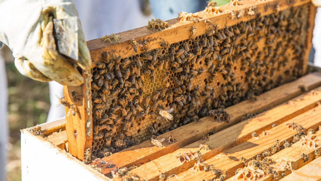 Beekeeping 1068x604