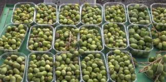 Mini Kiwi Baby Fruit Actinidia Arguta In Agriculture Market Eyvi 5vg F0000 324x160
