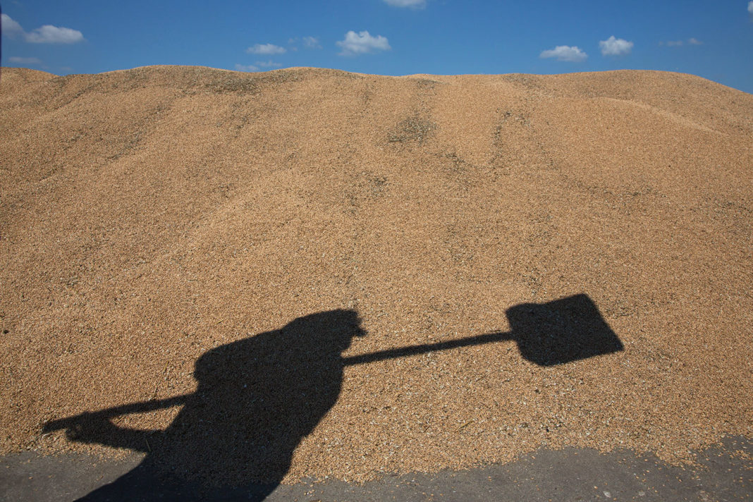 Law Of Spikelets The Ministry Of Agrarian Policy Estimates The Shadow Market Of Grain In 20