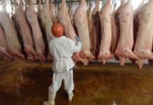 Show Me Your Lard The Controllers From The Eu Came To Ukrainian Pig Farms