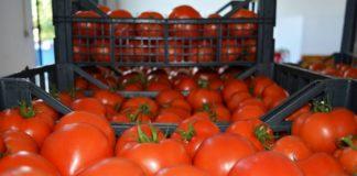 Tomaty 324x160