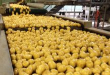 Starchy Roshen Poroshenko Is To Build A Manufacture For The Production Of Modified Starch