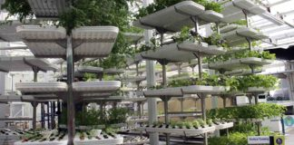 Vertical Farming 324x160